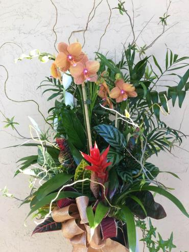 Orchid and Bromeliad