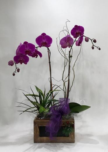 Orchid in the Box